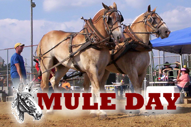Mule Day Columbia Tennessee Events